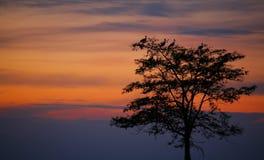 för storkssolnedgång för ciconia perching tree Royaltyfria Foton