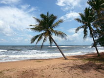 för strandö för 2 fjärd quoc sandiga vietnam för phu för mango Royaltyfria Bilder