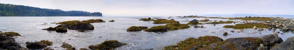 för strand Stillahavs- panorama- northwest Royaltyfria Bilder