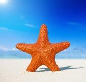 För strandsommar för sjöstjärna tropiskt begrepp för semester Arkivfoton