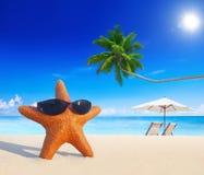 För strandsommar för sjöstjärna tropiskt begrepp för semester Royaltyfri Bild