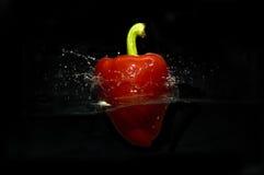 För studiofärgstänk för röd peppar behållare arkivfoton