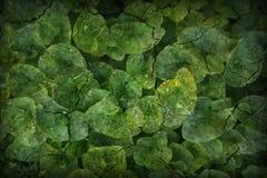 För surfasebakgrund för konst växt- grön textur vektor illustrationer