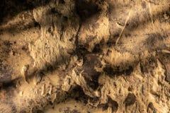 För svampyttersida för Grunge gul textur royaltyfria foton