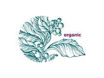 För symbolnaturen för vektorn skissar organisk konst för gräsplan för designen tekompisfilialen royaltyfri illustrationer