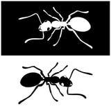 För symbolsvektor för två myror bild Royaltyfri Foto