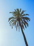 För tappninghimmel för palmträd tropiskt materiel för foto för sommar - Arkivbilder
