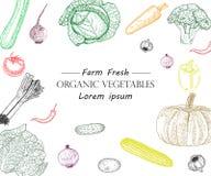 För tappningvektor för grönsak hand dragen illustration Lantgårdmarknadsaffisch Vegetarianuppsättning av organiska produkter vektor illustrationer