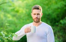 För tebonden för mannen rånar den skäggiga hållen naturbakgrund Grönt te innehåller bioactive sammansättningar som förbättrar häl arkivbilder