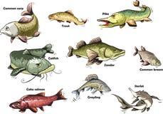 för tecknad filmbegreppet för konst 3d fisken framför Arkivfoto
