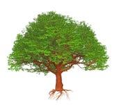 för tecknad filmgreen för bakgrund isolerade den stora illustrationen treevektorwhite royaltyfri illustrationer