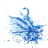` För tecknings`-svan, papper, vattenfärg Arkivfoton