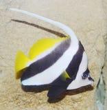 för teckningsfisk för akvarium svart linje white Royaltyfri Bild