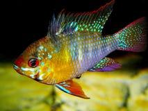 för teckningsfisk för akvarium svart linje white Arkivfoton