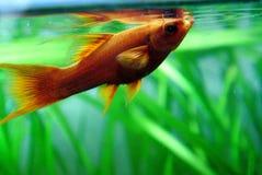 för teckningsfisk för akvarium svart linje white royaltyfri foto
