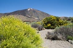 för tenerife för canadas kanariefågel del ö lasspain teide vulkan dal Royaltyfria Foton