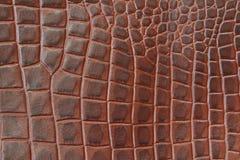 För texturbackgroundr för äktt läder som närbild utföra i relief under huden en reptil, brunt färgtryck Naturlig bakgrund Arkivfoton