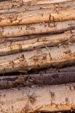 för texturtree för bakgrund modell staplade stammar Royaltyfri Foto