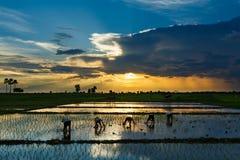 För Thailand för landskap för irländarefält härlig suddighet för solnedgång för soluppgång risfält Arkivfoto