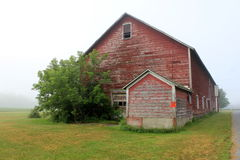 för tidig gammal red mistmorgon för ladugård Arkivbild