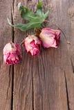för torr trägammala ro leaflönn för bakgrund Royaltyfria Bilder