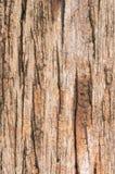 För träbrunt för textur gammal tappning för bakgrund Fotografering för Bildbyråer