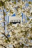 By för trädgård för vit blomma för Buss stopp Arkivbilder