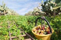 för trädgårds- tree för tid jordningsskörd för äpple mogen Arkivfoto