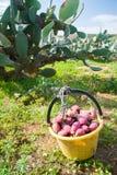 för trädgårds- tree för tid jordningsskörd för äpple mogen Arkivbild