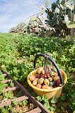 för trädgårds- tree för tid jordningsskörd för äpple mogen Royaltyfri Fotografi