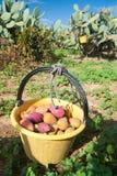 för trädgårds- tree för tid jordningsskörd för äpple mogen Royaltyfri Foto