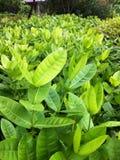 För trädnatur för blad härlig grön bakgrund Arkivfoto