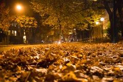 För trädnedgång för guling sidor malde bilar för stad för afton Royaltyfri Foto