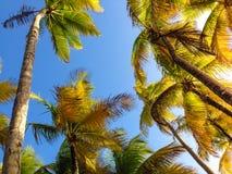 För trädsemesterort för natur ljus turism Puerto Rico för lopp för himmel för växt för kokosnöt Arkivfoto
