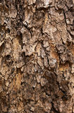 För trädskäll för brunt torr textur Royaltyfri Fotografi