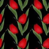 För tulpanillustration för blom- sömlös modell röd bakgrund för svart Fotografering för Bildbyråer