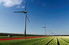 för tulpanturbiner för fält röd wind för white royaltyfri bild