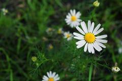 för tusenskönadjupfält för kortslutning white mycket Fotografering för Bildbyråer