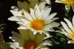 för tusenskönadjupfält för kortslutning white mycket royaltyfri fotografi