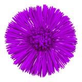 För Tussilagofarfara för blomma som lila moder och styvmor isoleras på vit bakgrund knoppcloseblomma upp element för klockajuldes arkivfoton
