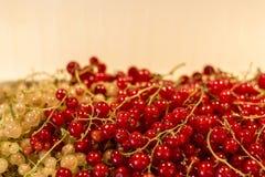 För Tyskland för jordbruksprodukter för röd för vit vinbär för bär för naturlig bakgrund trädgård för frukt bio organisk sunt uto Royaltyfria Bilder