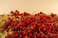 För Tyskland för jordbruksprodukter för röd för vit vinbär för bär för naturlig bakgrund trädgård för frukt bio organisk sunt uto Arkivbilder