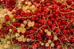 För Tyskland för jordbruksprodukter för röd för vit vinbär för bär för naturlig bakgrund trädgård för frukt bio organisk sunt uto Arkivfoton