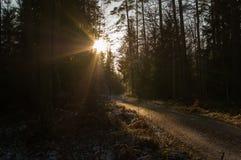för ukraine för molodabergsun vinter sikt Fotografering för Bildbyråer