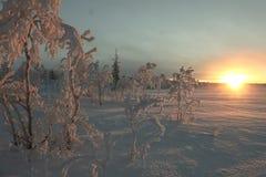 för ukraine för molodabergsun vinter sikt Royaltyfri Foto