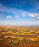 för universitetslärareskog för områden stor plain t för moorland mycket royaltyfri bild