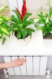 För uppvärmningvit för arm pålagt element Fönsterbräda med blommor arkivbilder