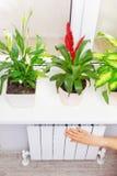 För uppvärmningvit för arm pålagt element Fönsterbräda med blommor arkivfoto