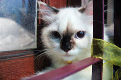 för uttryckshusdjur för katt gullig stående Royaltyfri Bild