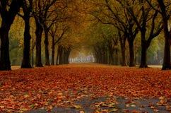 för vägsun för höst rider ut gröna trees yellow Royaltyfri Fotografi